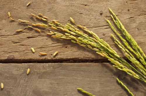 Zeal Wellness' Stabilized Rice Bran